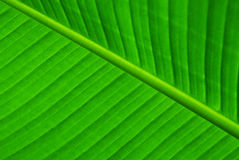 Leaves. Green Leaf Background Stock Image