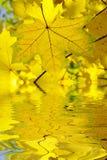 leaves fotografering för bildbyråer