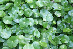 Leaves. Green background of plants stock image