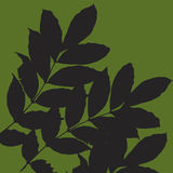 Leaves. Silhouetted leaves against a green background vector illustration