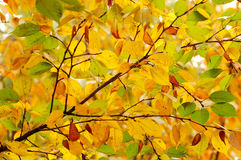 leaves. The colorful autumn leaves in the sun Royalty Free Stock Photos