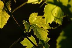 leaves Arkivbild