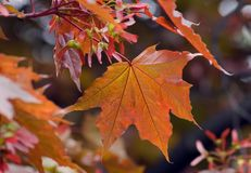 leaves royaltyfria bilder