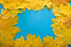 Leaves. Yellow autumn leaves on the blue background Royalty Free Stock Photo