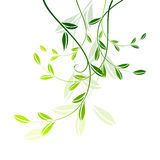 Leaves. Green leaves like floral element on white Stock Photos