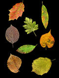 Leaves of 8 species in autumn Stock Images