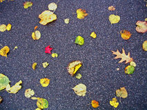 leaves Royaltyfri Bild