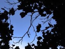 Leaves. Illustration of plant silhouettes stock illustration