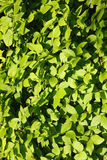 Leaves backgrounds Royalty Free Stock Photography