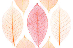 Leaves abstract Stock Images