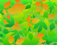 Leaves abstract background . Royalty Free Stock Images
