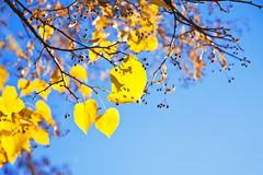 leaves against blue sky Royalty Free Stock Images