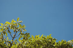 Leaves against blue sky background Stock Image