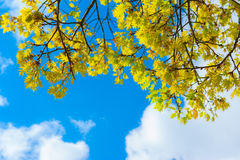 Leaves against blue sky with clouds Royalty Free Stock Image