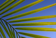 Leaves Against Sky Stock Photography