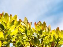 Leaves against sky Stock Photo