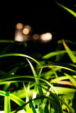 Leaves alive. Garden illuminated by night with a blurred silhouette of a building as backdrop Stock Photos