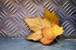 Leaves on Aluminum Royalty Free Stock Images