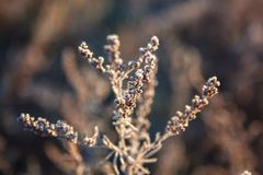 Leaves And Grass With Hoarfrost As A Background Royalty Free Stock Images