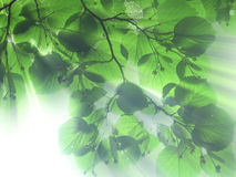 Free Leaves And Light Stock Photos - 507603