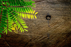 Leaves And Wood Stock Photography
