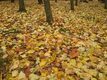 Leaves around trees Stock Images