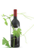 Leaves around wine bottle Royalty Free Stock Photo