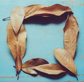 Leaves arranged in frame on blue stock images