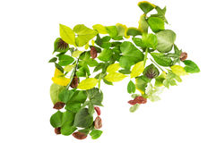 Leaves arrow Stock Image