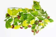 Leaves arrow Stock Photo