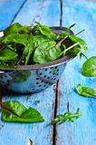 Leaves of arugula and chard Stock Images
