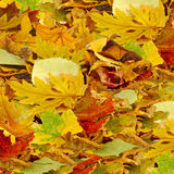 Leaves as a background closeup Royalty Free Stock Image