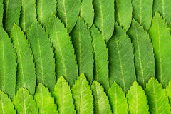 Leaves as background Royalty Free Stock Photo