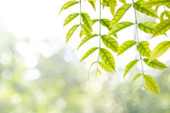 Leaves as frame against nature background. Leaves as frame against bright nature background Stock Images