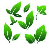 Green Gradient Leafs for Simple Logo. Leaves as a symbol of plant fertility, prosperity, freshness and often used as a logo in business and enterprise Royalty Free Stock Photos