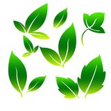 Green  Leafs for Simple Logo. Leaves as a symbol of plant fertility, prosperity, freshness and often used as a logo in business and enterprise Royalty Free Stock Image