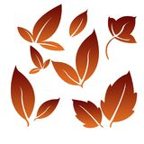 Red and brown Leafs for Simple Logo. Leaves as a symbol of plant fertility, prosperity, freshness and often used as a logo in business and enterprise Royalty Free Stock Photography