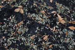 The leaves of the ash after the fire. Close up texture Royalty Free Stock Photo