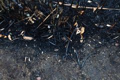 The leaves of the ash after the fire. Close up texture Royalty Free Stock Photos