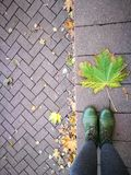 Leaves and asphalt. Autumn pavement strewn with leaves Stock Photography
