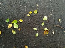 Leaves on the asphalt road. Some autumn leaves on an asphalt road. Fine background Stock Photography