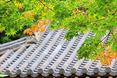 Leaves In Automn with Asian Traditional Roof royalty free stock photos