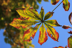 Leaves in autumn Stock Photos