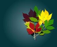 Leaves of autumn. Ectorial image background of otkytka abscissed  leaves of autumn Vector Illustration