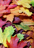 Leaves of autumn Royalty Free Stock Photo