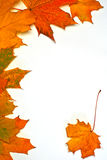 Leaves on autumn, Stock Photography
