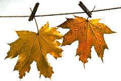 Leaves on autumn, Stock Images