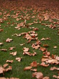 Leaves in autumn. MAny leaves sitting in a lush lawn in the Adelaide botanical gardens Stock Images