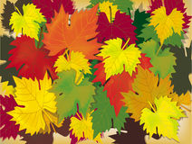Leaves, autumn.Autumn . Royalty Free Stock Images