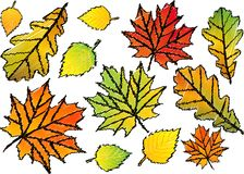 Leaves. Autumn background. Falling leaves on white background. Sketch Royalty Free Stock Images
